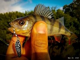 Железный аргумент на перекатах. Обзор SV Fishing Individ