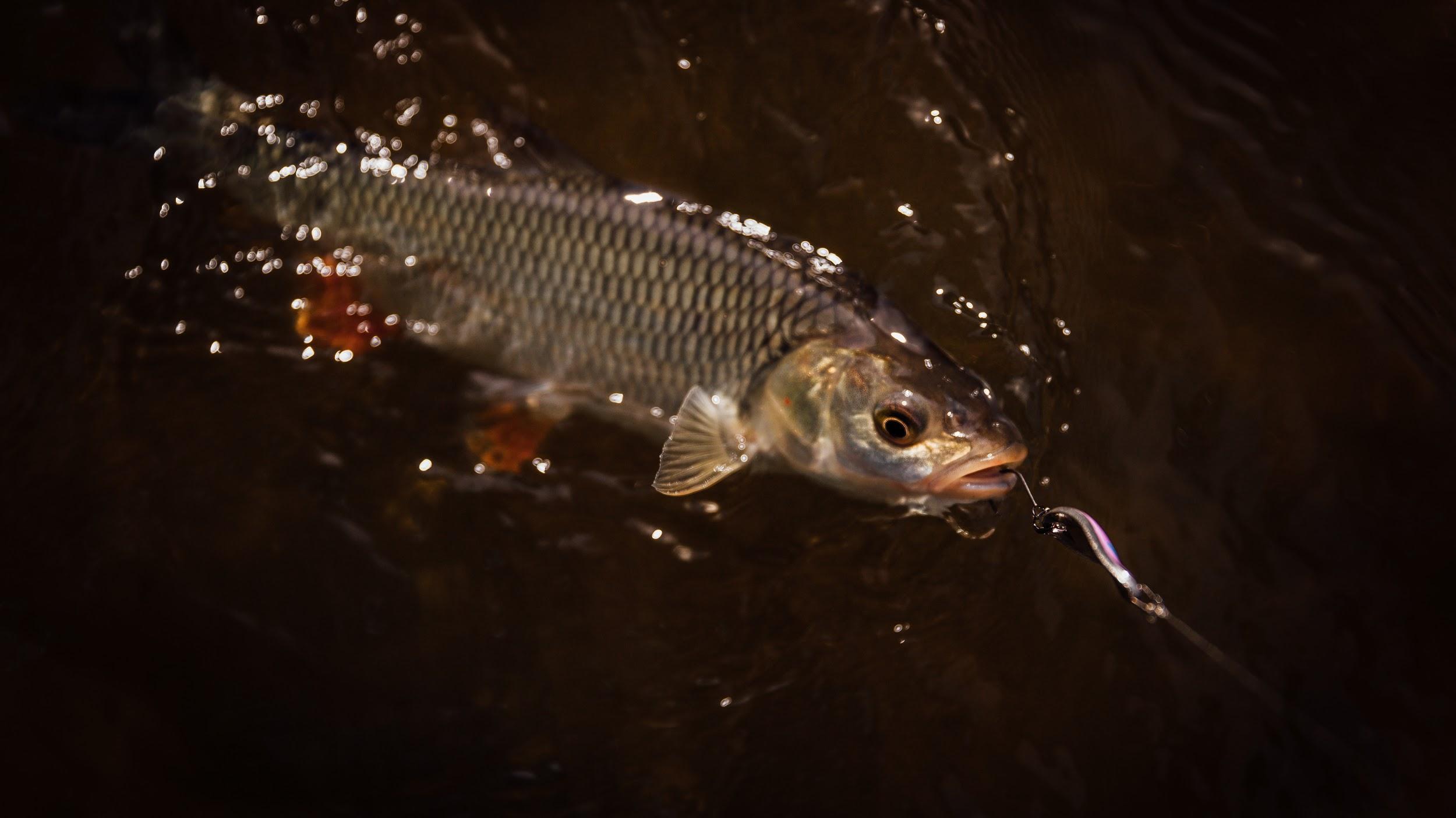 Одинарник – надежное удержание рыбы при вываживании